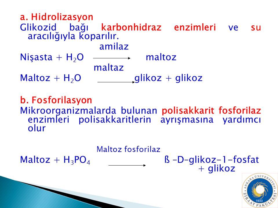 a. Hidrolizasyon Glikozid bağı karbonhidraz enzimleri ve su aracılığıyla koparılır. amilaz. Nişasta + H2O maltoz.