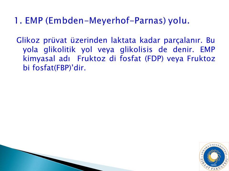 1. EMP (Embden-Meyerhof-Parnas) yolu.