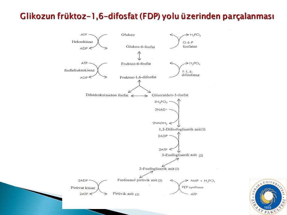 Glikozun früktoz-1,6-difosfat (FDP) yolu üzerinden parçalanması