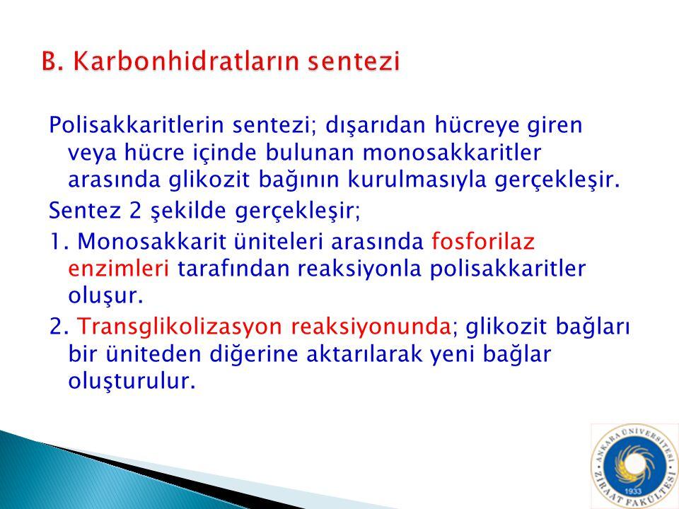 B. Karbonhidratların sentezi