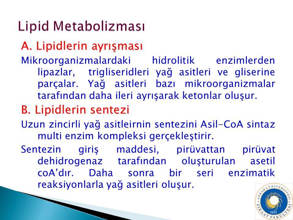 Lipid Metabolizması A. Lipidlerin ayrışması B. Lipidlerin sentezi