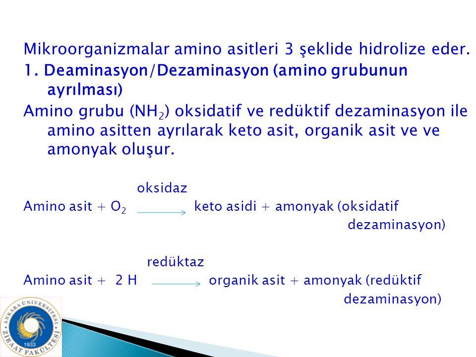 Mikroorganizmalar amino asitleri 3 şeklide hidrolize eder.