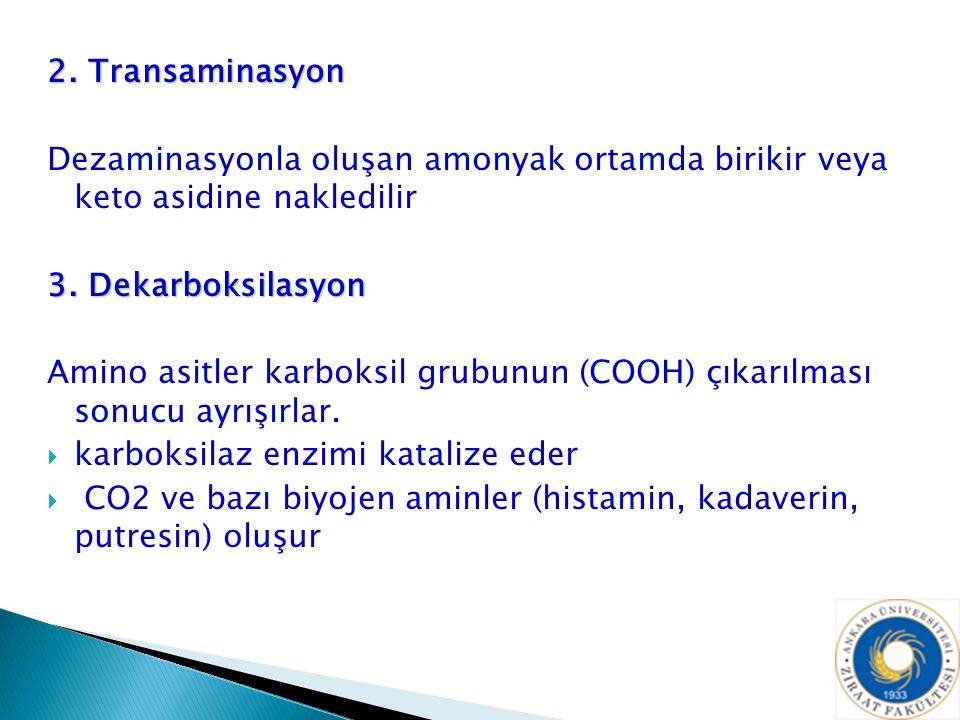 2. Transaminasyon Dezaminasyonla oluşan amonyak ortamda birikir veya keto asidine nakledilir. 3. Dekarboksilasyon.
