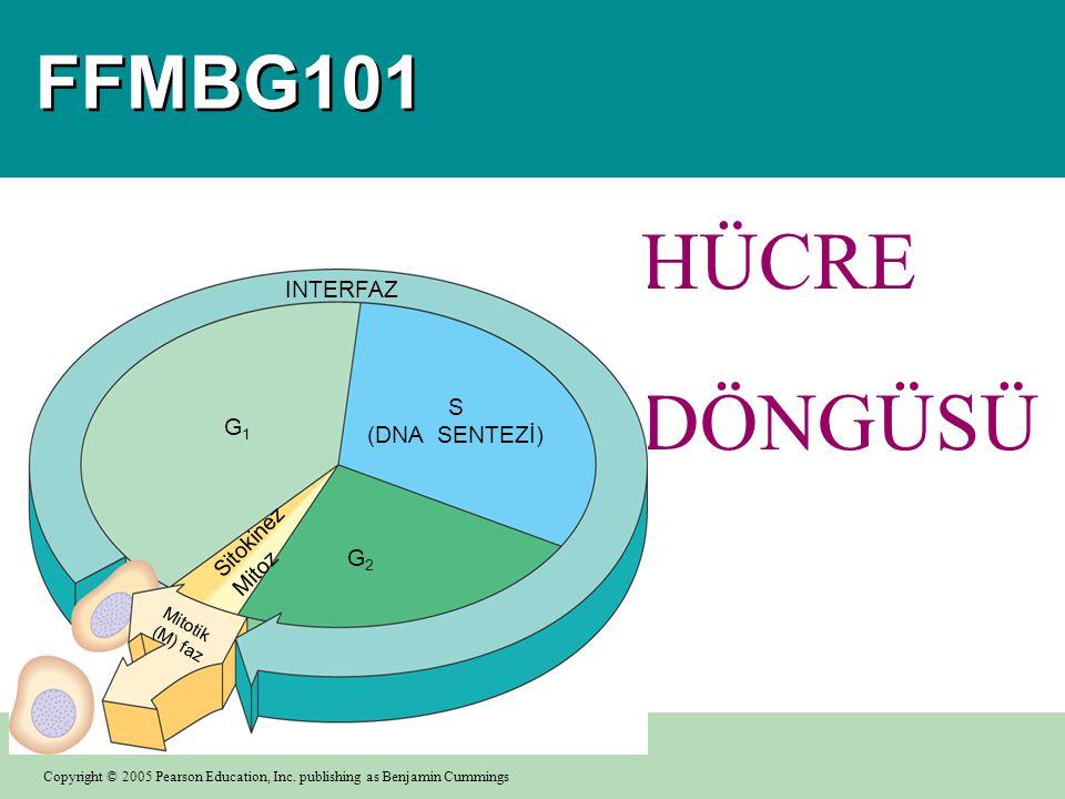 HÜCRE DÖNGÜSÜ FFMBG101 INTERFAZ S (DNA SENTEZİ) G1 G2 Sitokinez Mitoz