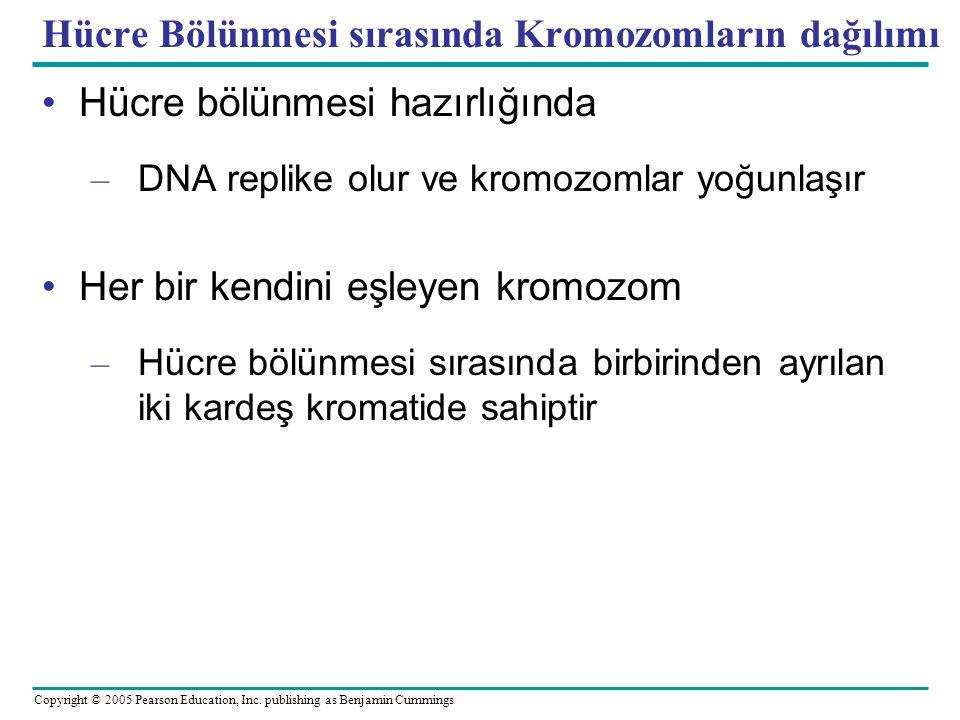 Hücre Bölünmesi sırasında Kromozomların dağılımı