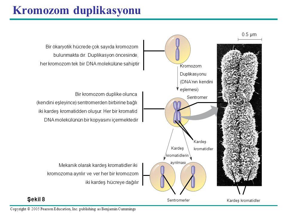 Kromozom duplikasyonu