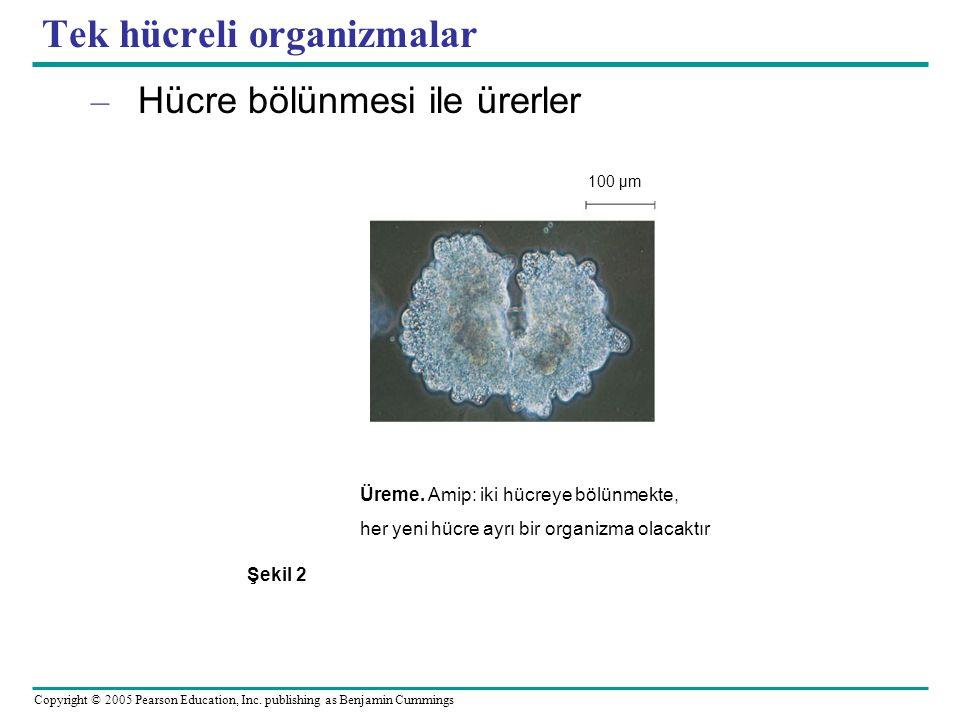 Tek hücreli organizmalar
