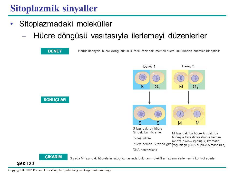 Sitoplazmik sinyaller