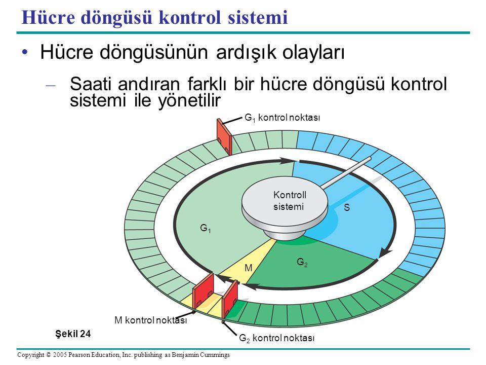Hücre döngüsü kontrol sistemi