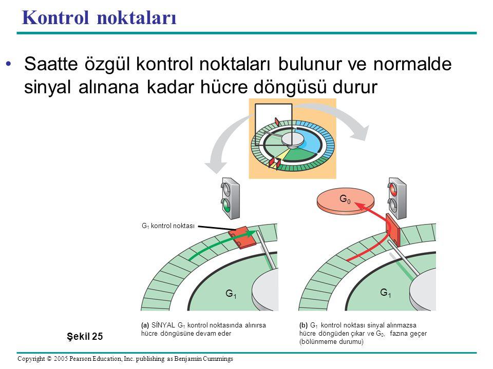 Kontrol noktaları Saatte özgül kontrol noktaları bulunur ve normalde sinyal alınana kadar hücre döngüsü durur.