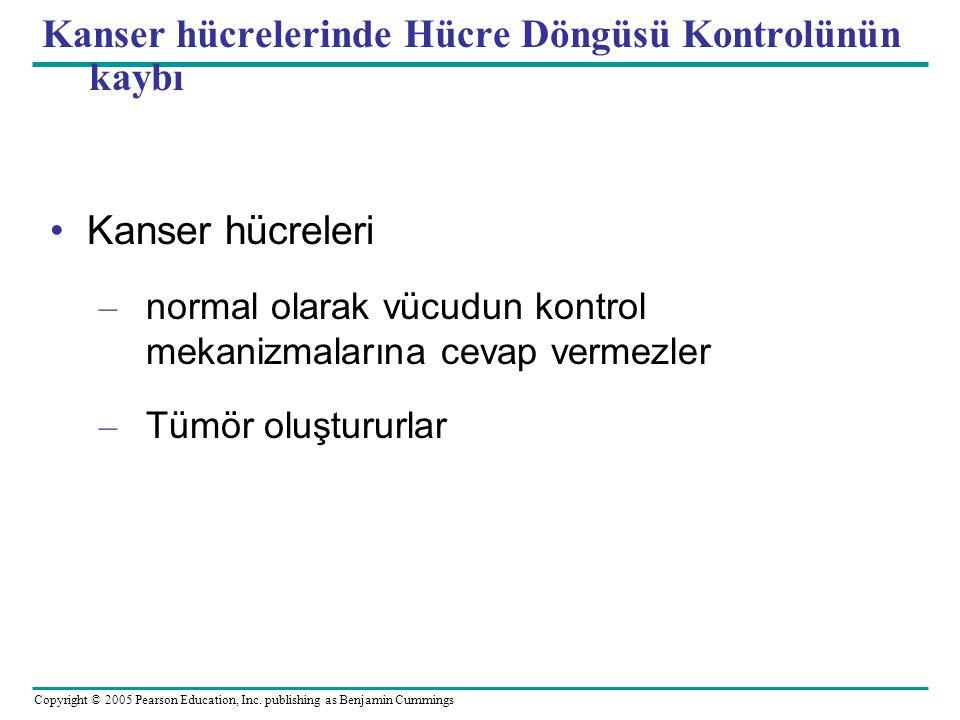 Kanser hücrelerinde Hücre Döngüsü Kontrolünün kaybı