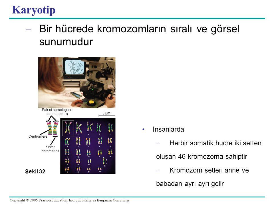 Karyotip Bir hücrede kromozomların sıralı ve görsel sunumudur