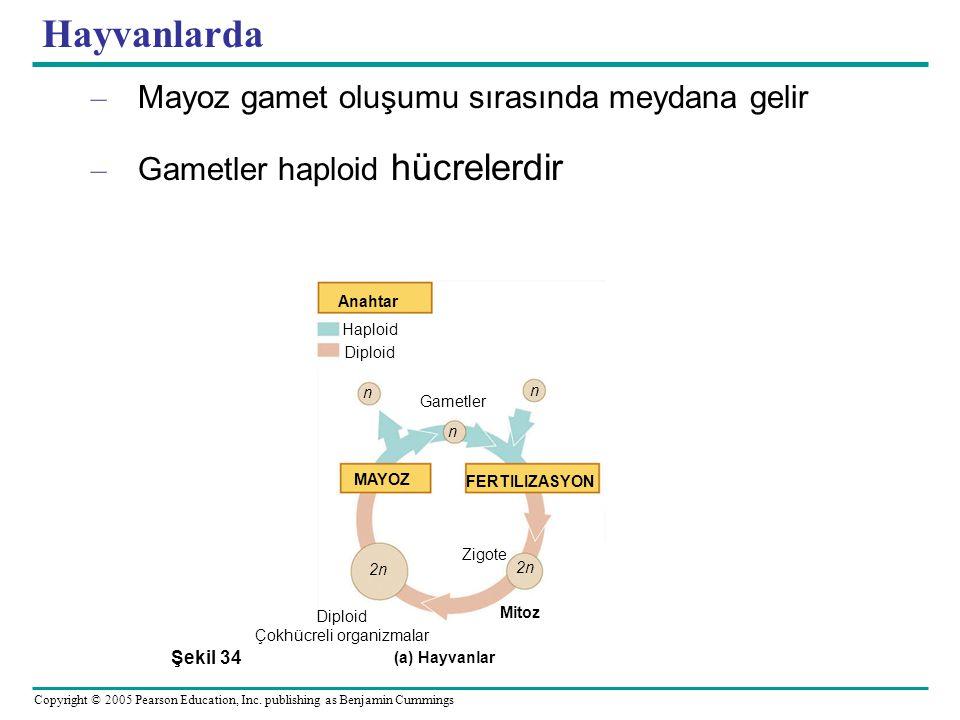 Çokhücreli organizmalar