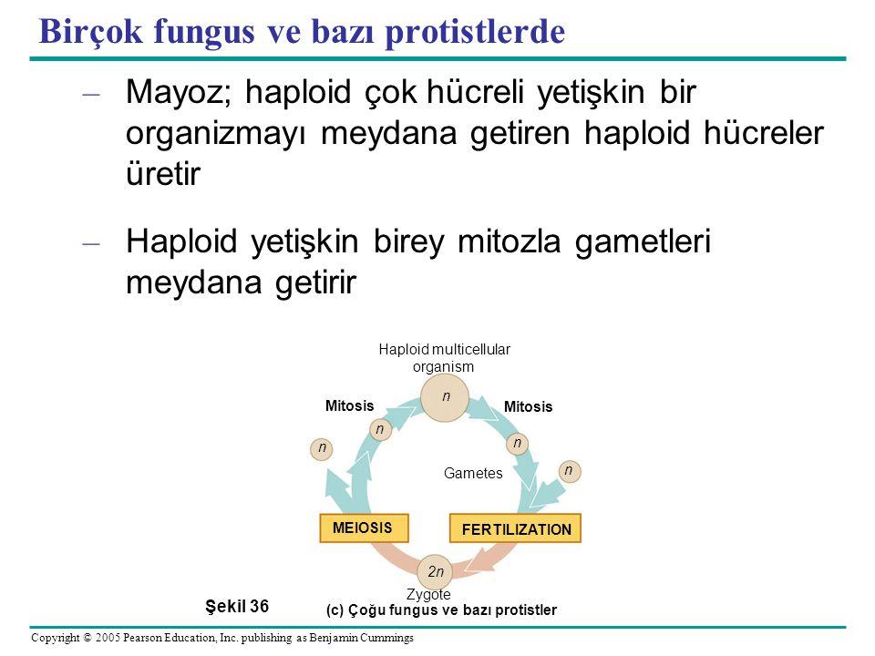 Birçok fungus ve bazı protistlerde