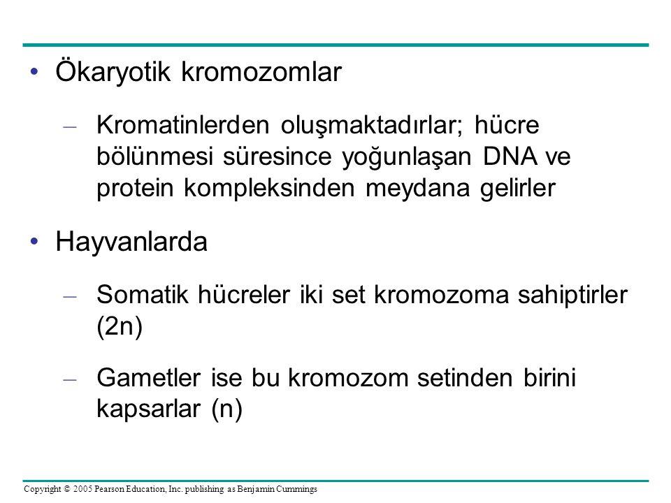 Ökaryotik kromozomlar