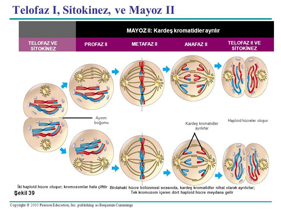 Telofaz I, Sitokinez, ve Mayoz II