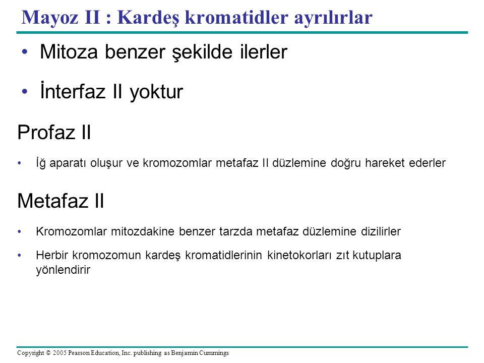 Mayoz II : Kardeş kromatidler ayrılırlar