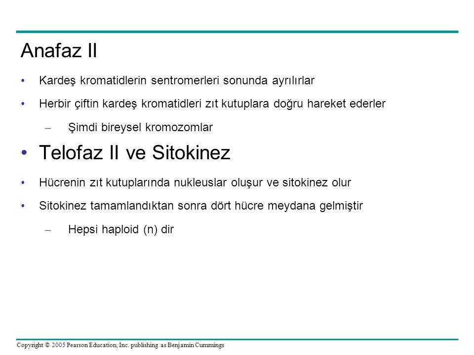 Telofaz II ve Sitokinez