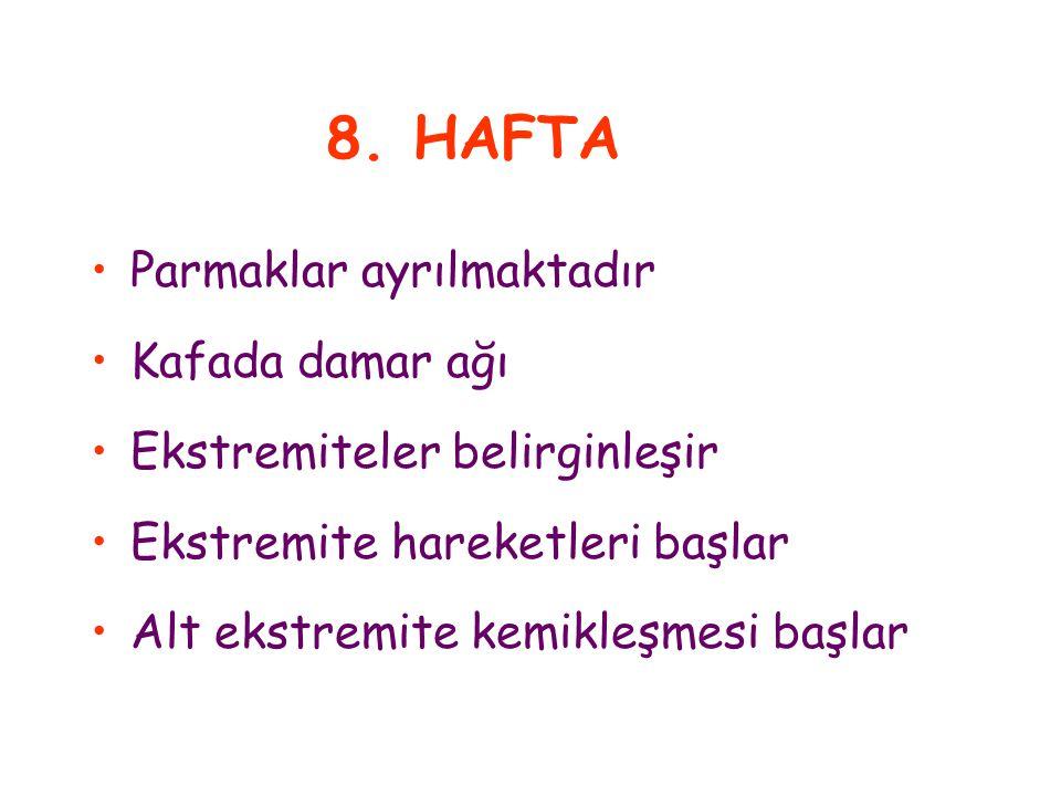8. HAFTA Parmaklar ayrılmaktadır Kafada damar ağı