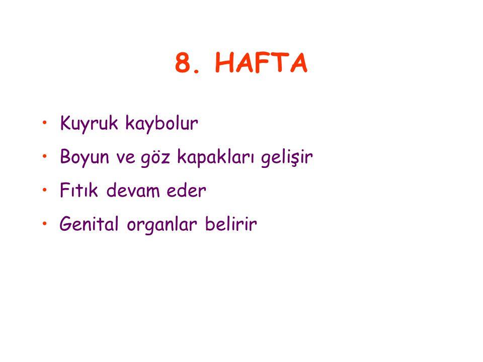 8. HAFTA Kuyruk kaybolur Boyun ve göz kapakları gelişir