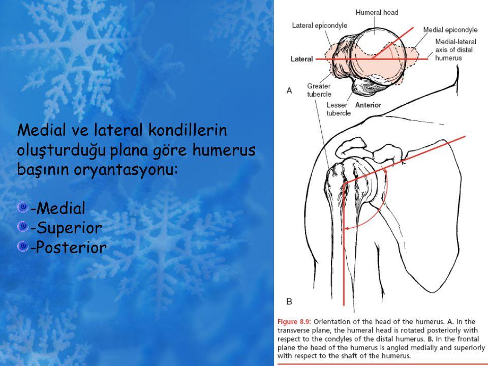 Medial ve lateral kondillerin