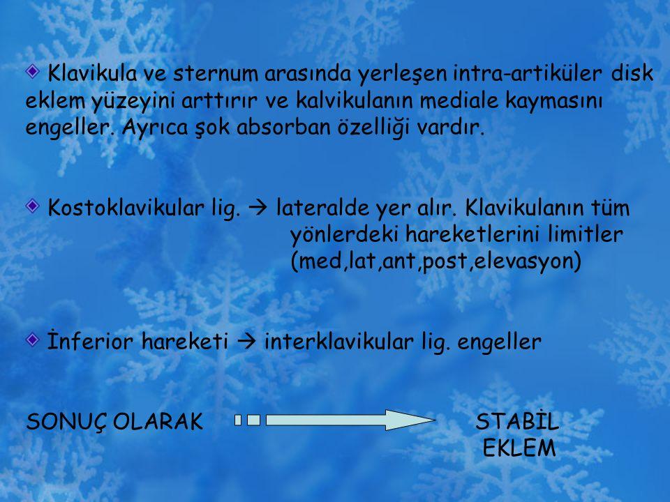 Klavikula ve sternum arasında yerleşen intra-artiküler disk