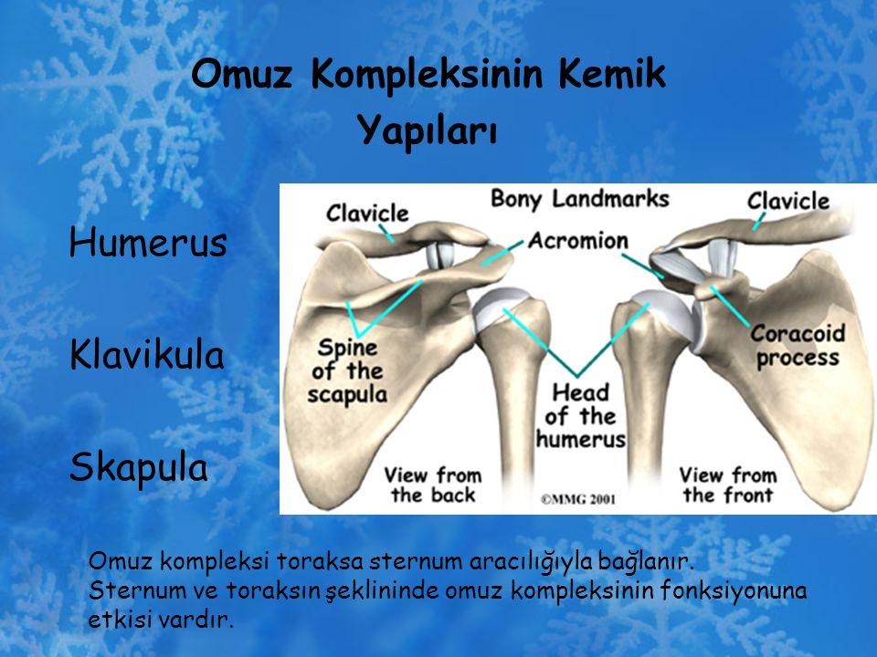 Omuz Kompleksinin Kemik Yapıları Humerus Klavikula Skapula