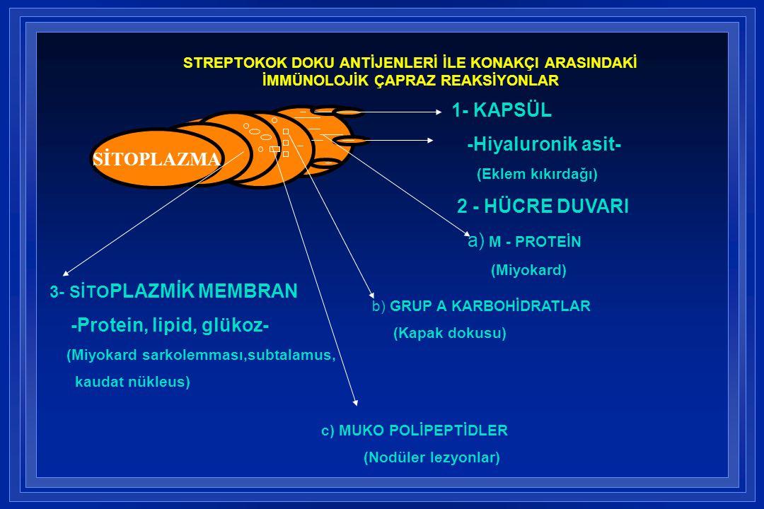-Protein, lipid, glükoz-