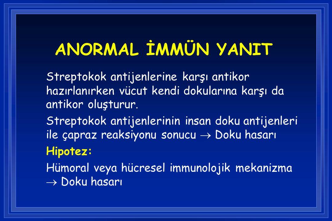 ANORMAL İMMÜN YANIT Streptokok antijenlerine karşı antikor hazırlanırken vücut kendi dokularına karşı da antikor oluşturur.