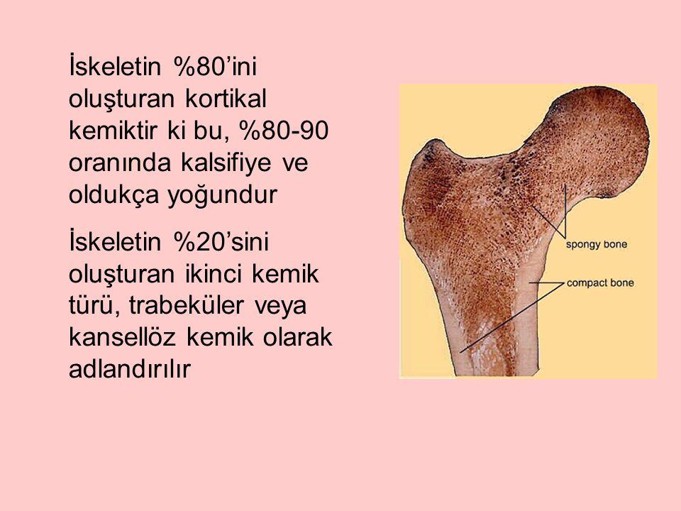 İskeletin %80'ini oluşturan kortikal kemiktir ki bu, %80-90 oranında kalsifiye ve oldukça yoğundur