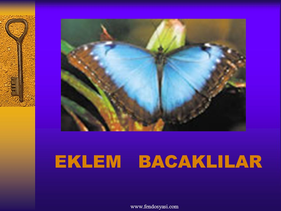 EKLEM BACAKLILAR www.fendosyasi.com