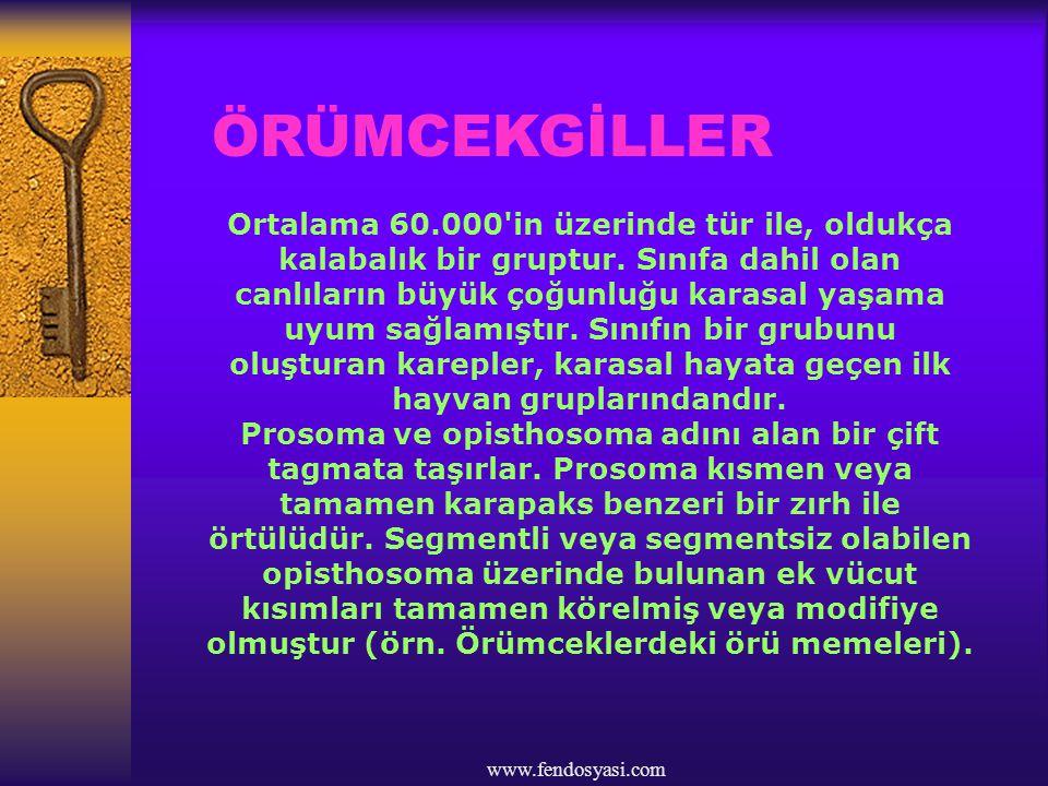 ÖRÜMCEKGİLLER