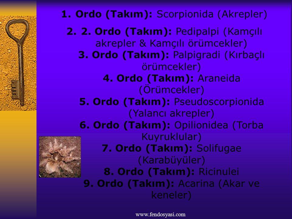 Ordo (Takım): Scorpionida (Akrepler)