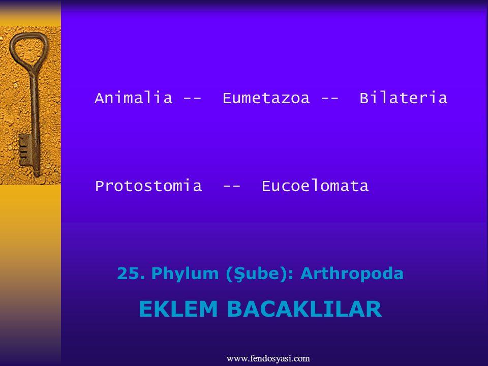 25. Phylum (Şube): Arthropoda