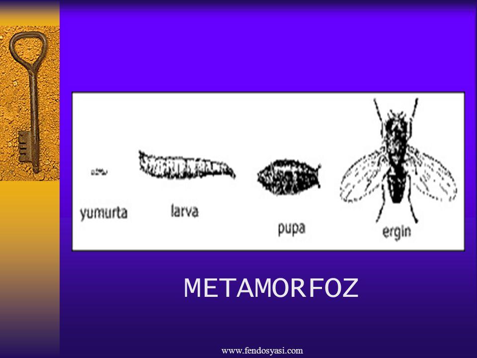 METAMORFOZ www.fendosyasi.com