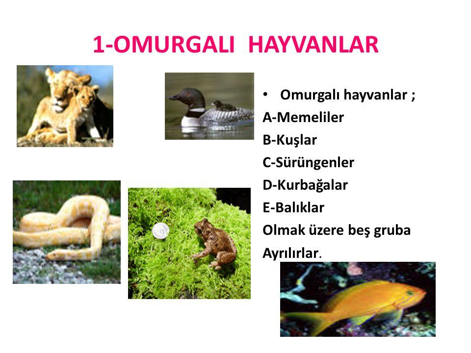 1-OMURGALI HAYVANLAR Omurgalı hayvanlar ; A-Memeliler B-Kuşlar