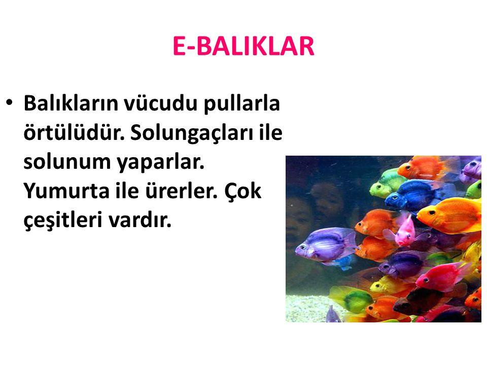 E-BALIKLAR Balıkların vücudu pullarla örtülüdür. Solungaçları ile solunum yaparlar.