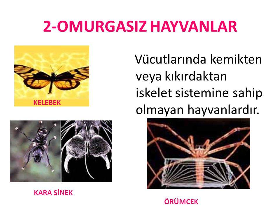 2-OMURGASIZ HAYVANLAR Vücutlarında kemikten veya kıkırdaktan iskelet sistemine sahip olmayan hayvanlardır.