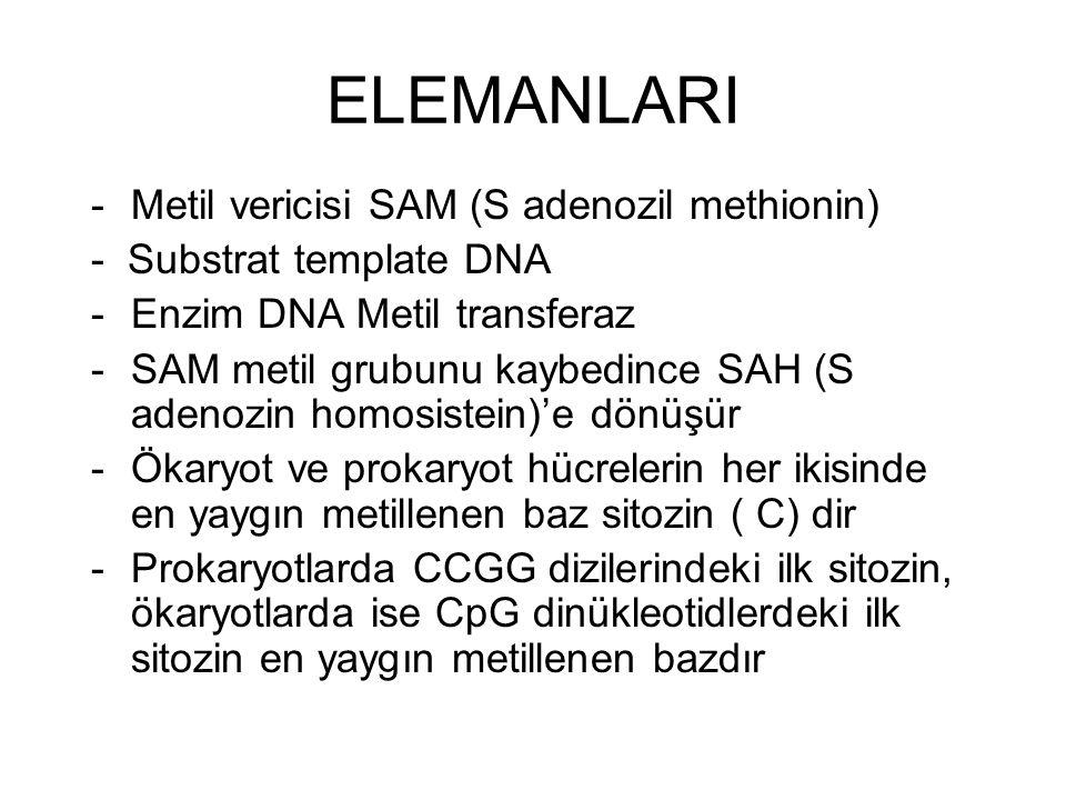 ELEMANLARI Metil vericisi SAM (S adenozil methionin)