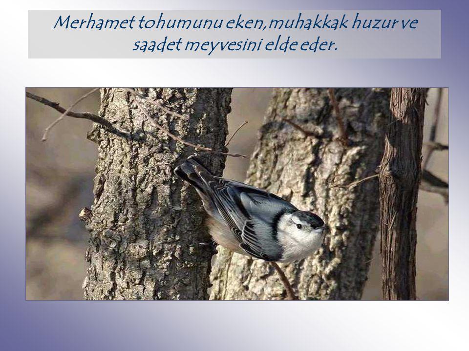 Merhamet tohumunu eken,muhakkak huzur ve saadet meyvesini elde eder.