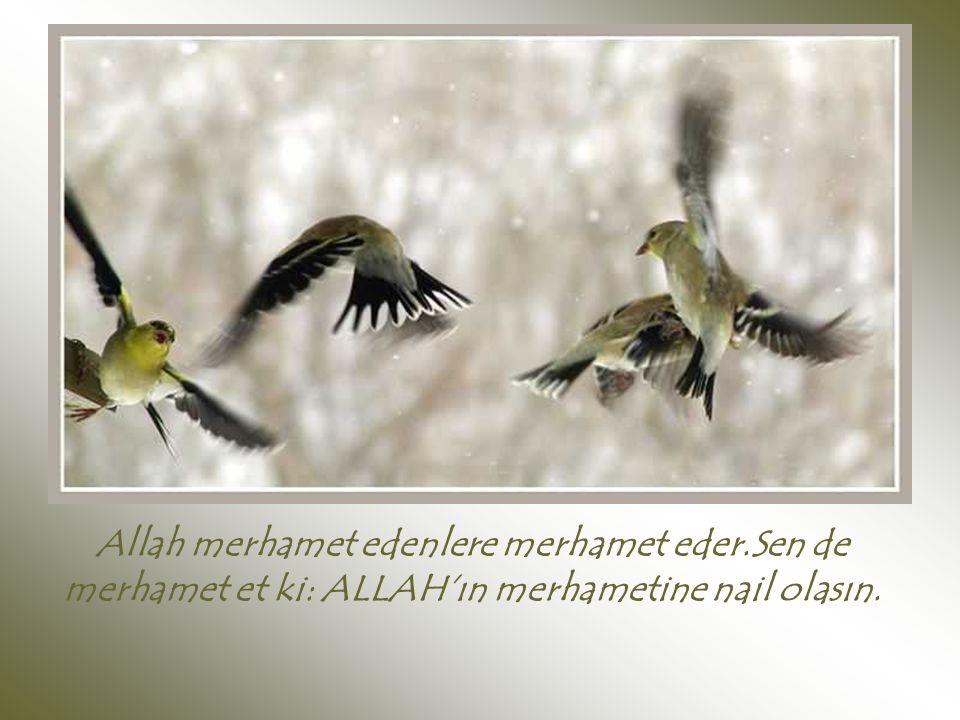 Allah merhamet edenlere merhamet eder