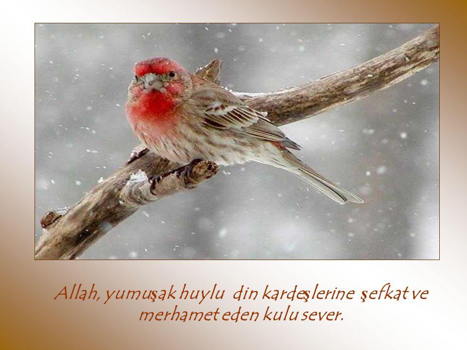 Allah, yumuşak huylu din kardeşlerine şefkat ve merhamet eden kulu sever.