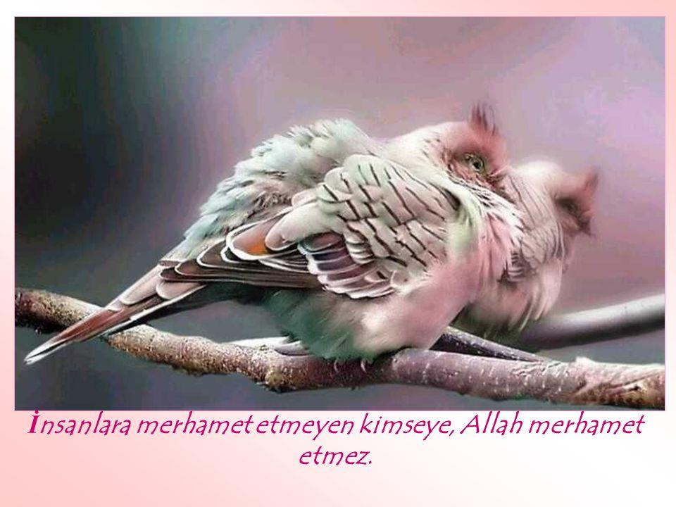 İnsanlara merhamet etmeyen kimseye, Allah merhamet etmez.