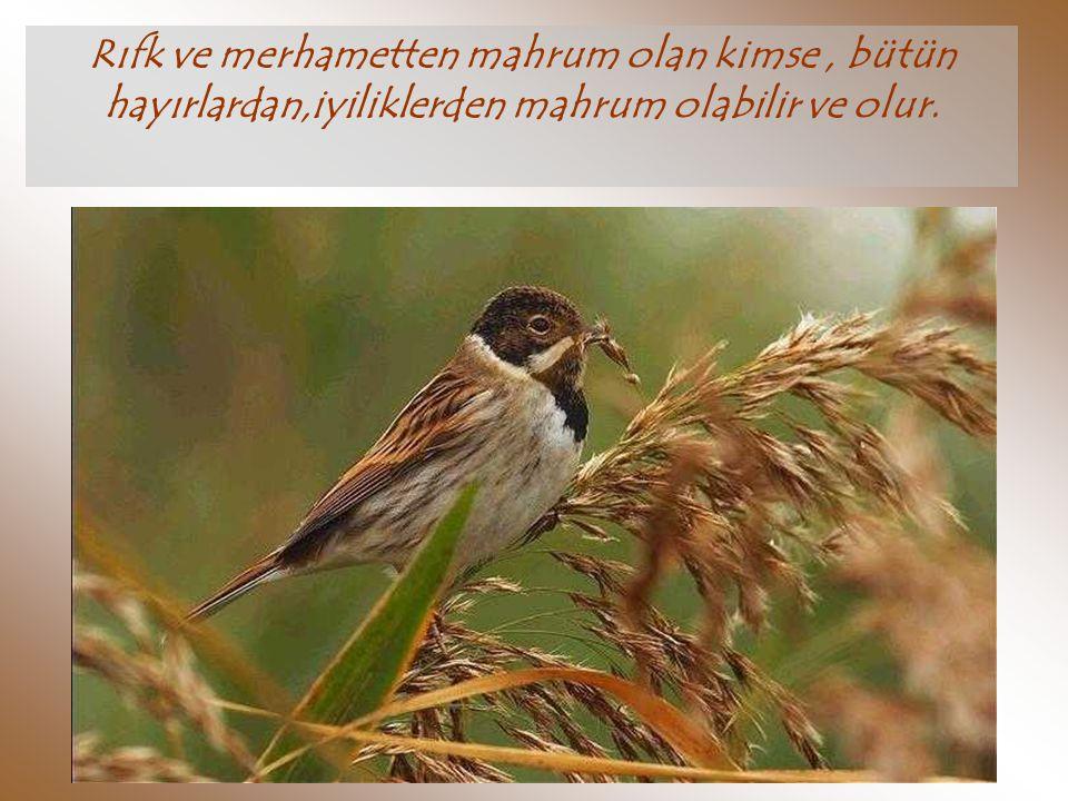 Rıfk ve merhametten mahrum olan kimse , bütün hayırlardan,iyiliklerden mahrum olabilir ve olur.