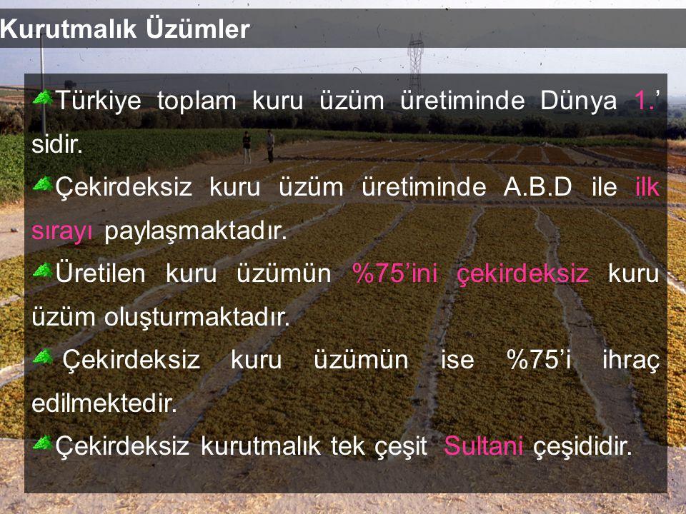 Kurutmalık Üzümler Türkiye toplam kuru üzüm üretiminde Dünya 1.' sidir. Çekirdeksiz kuru üzüm üretiminde A.B.D ile ilk sırayı paylaşmaktadır.