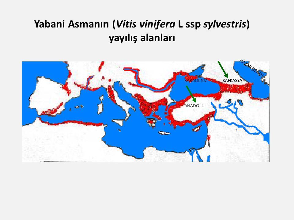 Yabani Asmanın (Vitis vinifera L ssp sylvestris) yayılış alanları