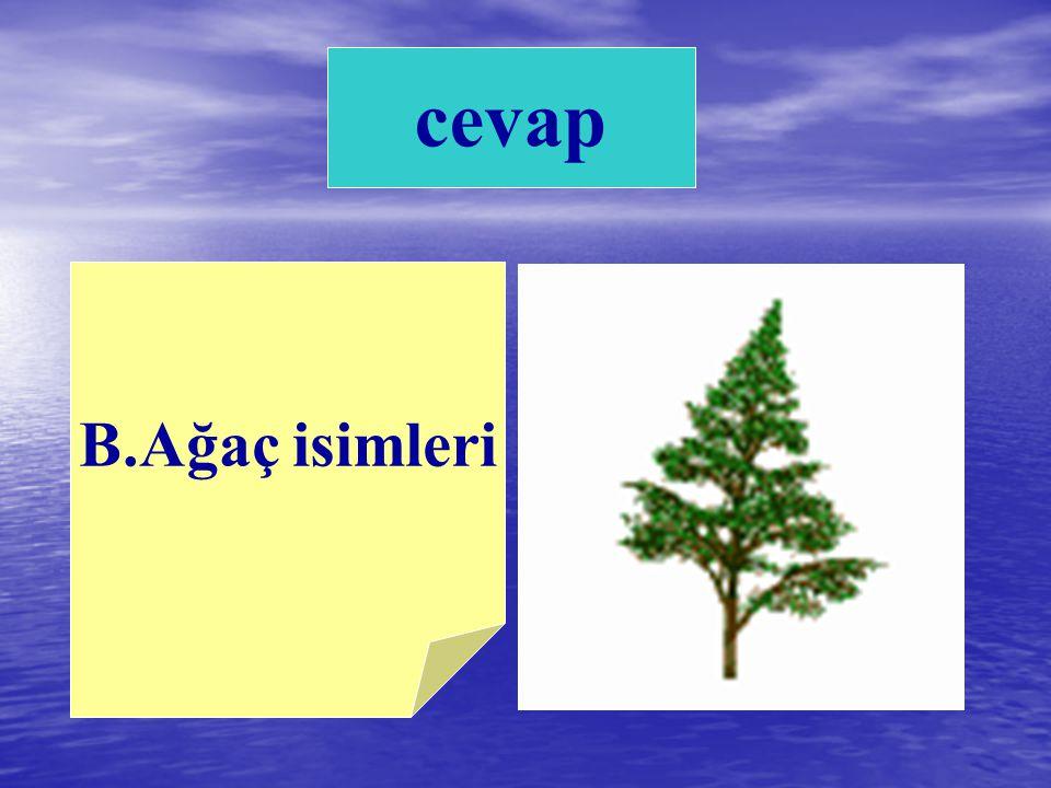 cevap B.Ağaç isimleri