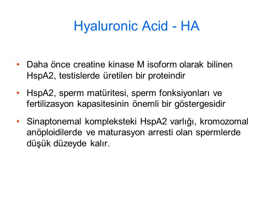 Hyaluronic Acid - HA Daha önce creatine kinase M isoform olarak bilinen HspA2, testislerde üretilen bir proteindir.