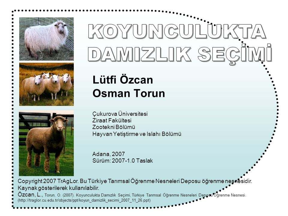 KOYUNCULUKTA DAMIZLIK SEÇİMİ Lütfi Özcan Osman Torun