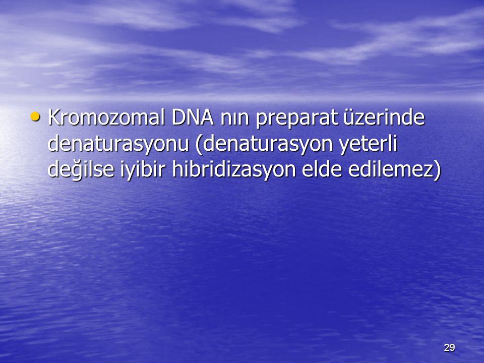 Kromozomal DNA nın preparat üzerinde denaturasyonu (denaturasyon yeterli değilse iyibir hibridizasyon elde edilemez)